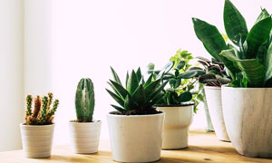 摆在桌面上的多种植物特写摄影图片