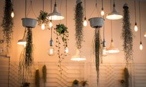 植物藤蔓与亮着的吊灯摄影高清图片