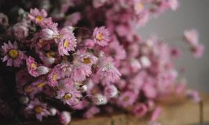 桌上的粉红色小花特写摄影高清图片