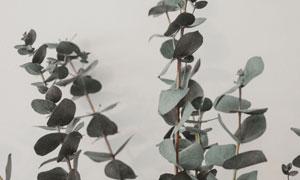 家居装饰品尤加利叶子摄影高清图片