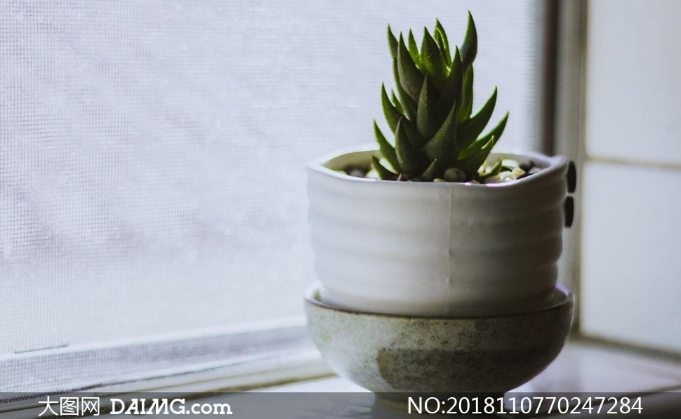 窗台上的芦荟植物特写摄影高清图片