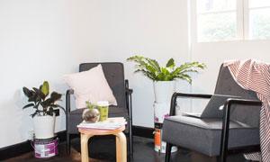 客厅房间植物沙发摆放摄影高清图片