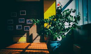 房间照片墙与绿叶植物摄影高清图片