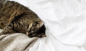在床上睡着的可爱猫咪摄影高清图片