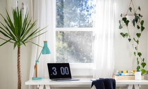 书桌旁的绿植藤蔓装饰摄影高清图片