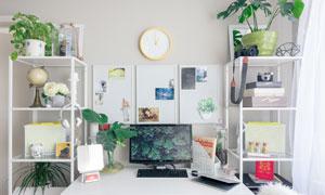 书桌置物架上的植物等摄影高清图片