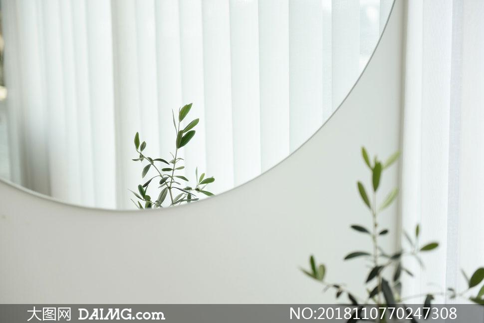 镜子里的绿叶植物特写摄影高清图片