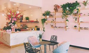 房间室内植物装饰效果摄影高清图片