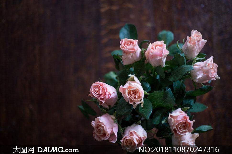 花瓶里的粉色玫瑰特写摄影高清图片