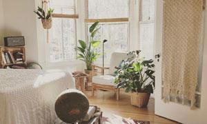 卧室陈设与绿叶的植物摄影高清图片