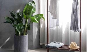 房间绿叶植物与挂衣架摄影高清图片