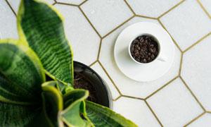 咖啡豆与长势很好的虎皮兰高清图片