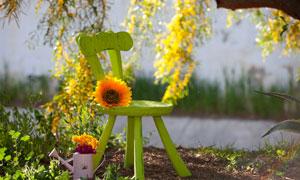 草丛与椅子上的一朵花摄影高清图片