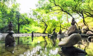 树林与清澈水中的岩石摄影高清图片