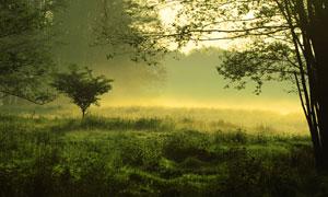 樹木與霧氣升騰的草叢攝影高清圖片