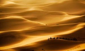 连绵起伏金色沙漠风光摄影高清图片
