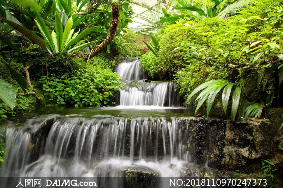 繁密丛林中的瀑布风景摄影高清图片