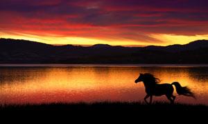 在湖边奔跑的马匹剪影摄影高清图片