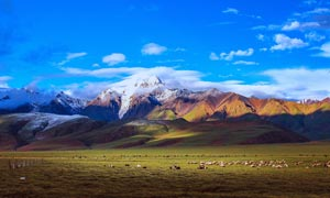 西藏草原上羊群美景摄影图片