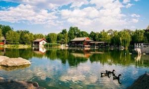 公园里的湖泊美景摄影图片