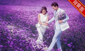 紫色的薰衣草花丛主题抠图背景模板
