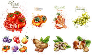 柿子与番茄等水彩水果主题矢量素材