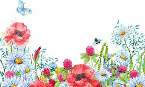 引来蜜蜂与蝴蝶的花草植物高清图片