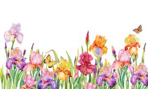 水彩效果的花草丛植物主题高清图片