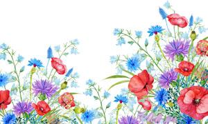 手绘水彩风格花朵植物主题高清图片