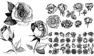 黑白线描风格玫瑰花朵设计矢量素材