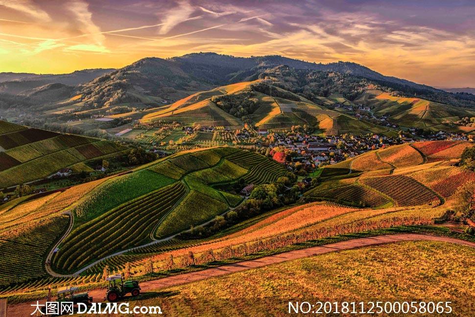 夕阳下的山中葡萄园摄影图片
