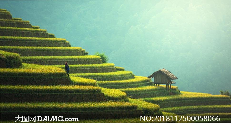 山坡美丽的梯田景色摄影图片