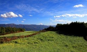 蓝天下的高原和草地摄影图片
