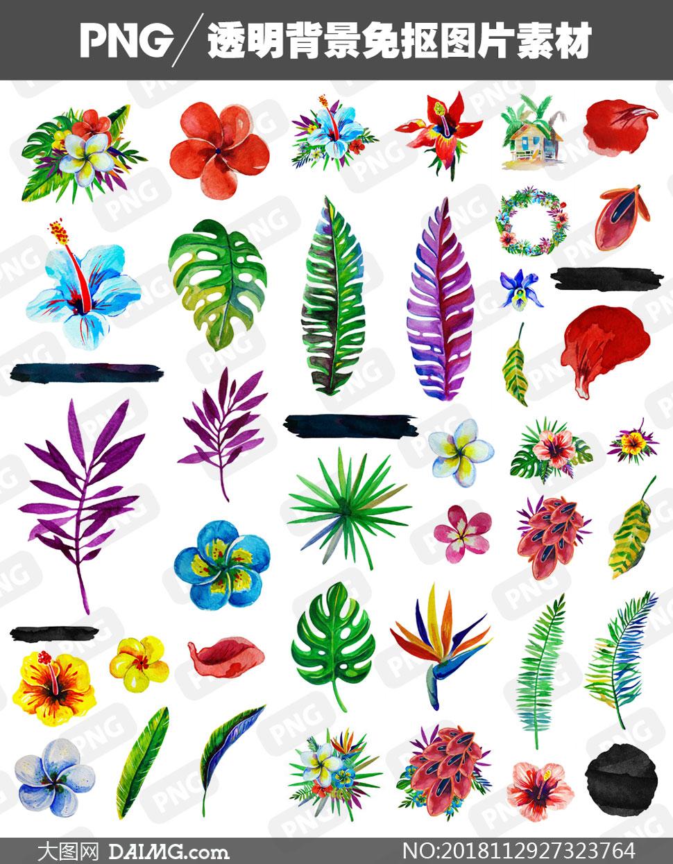 水彩效果熱帶風情植物免摳圖片素材