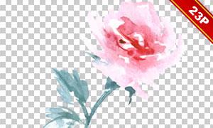 水彩创意绿叶与玫瑰花免抠图片素材