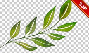 多种植物绿叶主题水彩免抠图片素材