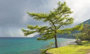 大海边的大树草地风光摄影高清图片