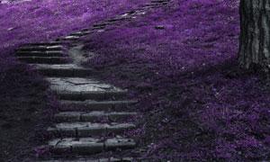 紫色草点缀的上山台阶摄影高清图片