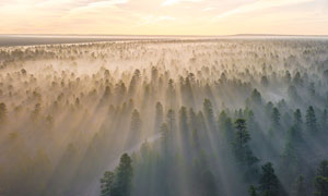 清晨雾气蒙蒙的森林美景摄影图片