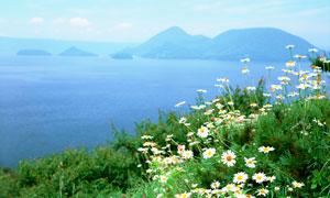 海岛上美丽的小野花摄影图片