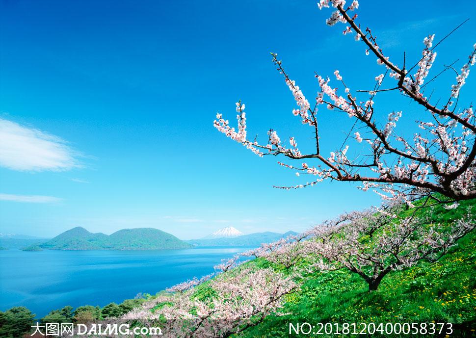 大图首页 高清图片 自然风景 > 素材信息          春季海岛上樱花园