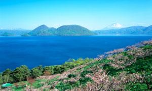 春季海岛上樱花园高清摄影图片