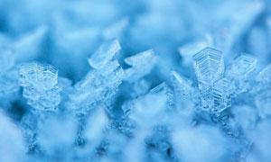 冬季美丽的霜花景观摄影图片