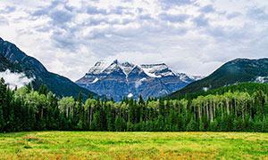 雪山下的樹林和草地攝影圖片