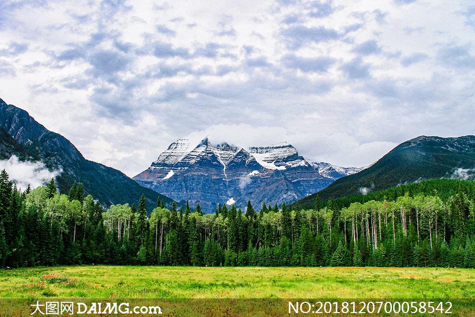 雪山下的树林和草地摄影图片