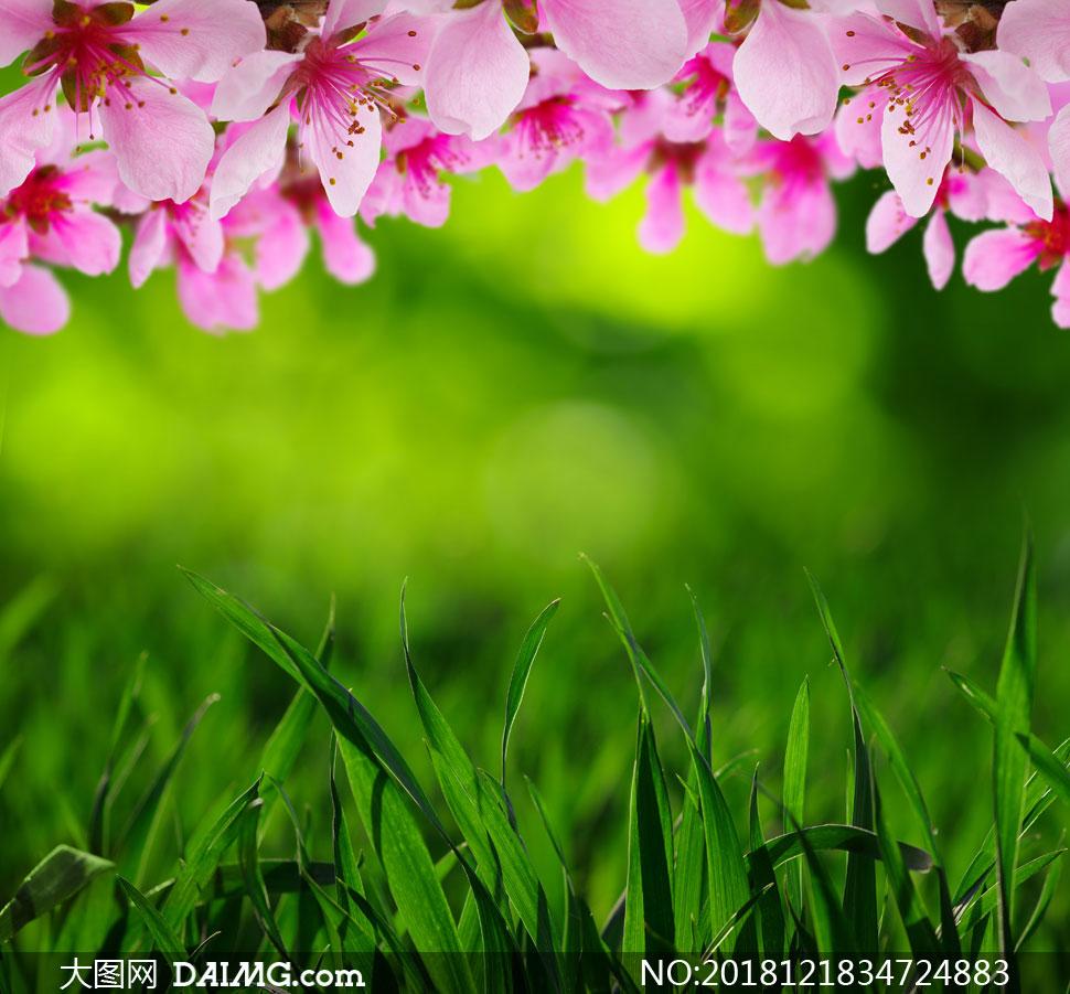 粉红色鲜花与青青草丛摄影高清图片