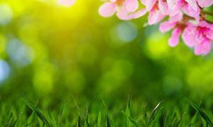 青草与粉色的花朵特写摄影高清图片