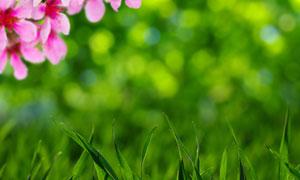 青青草丛与粉色的花朵摄影高清图片