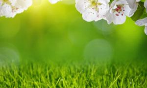 白花与青绿色的杂草丛摄影高清图片