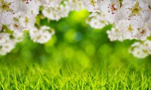 青草与纷纷绽放的花朵摄影高清图片